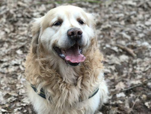 medische detectiehonden sporen darmkanker op